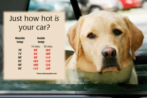 How To Get Your Dogs Temperature Down