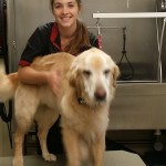 Fur Talk Too with Groomer Alicia – from Lucky's Bed & Biscuit