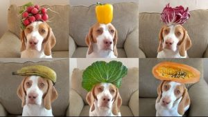 fruits for dogs