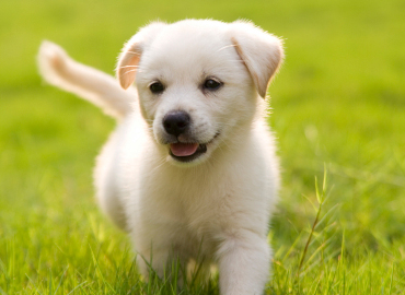 Want To Get Your New Puppy Groomed Here Are Some Quick Tips From Us