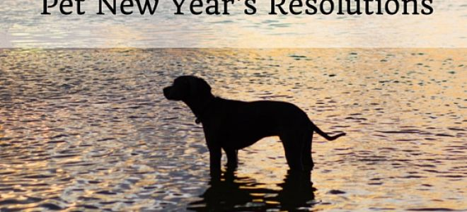New Year's Resolutions For You & Your Furry Family!