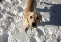 Lucky B&B's Furry Friday Feature: Scout!