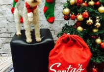 Santa is coming to Lucky's!