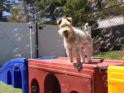 Lucky's Bed & Biscuit - Premier Pet Boarding Facility, LBI, NJ